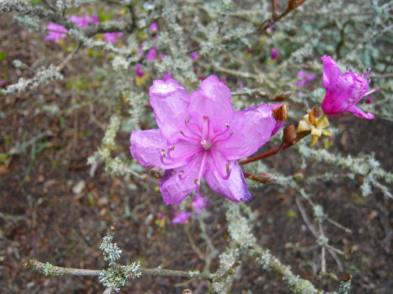 floral plant natural free photo