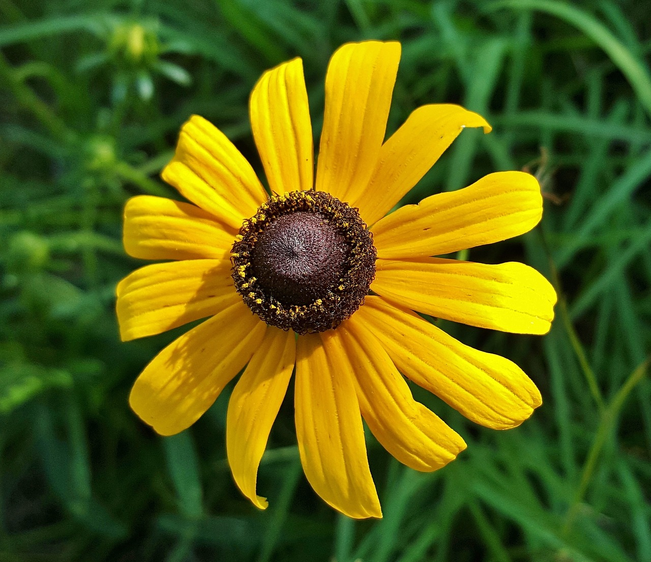 flower yellow flower wildflowers free photo