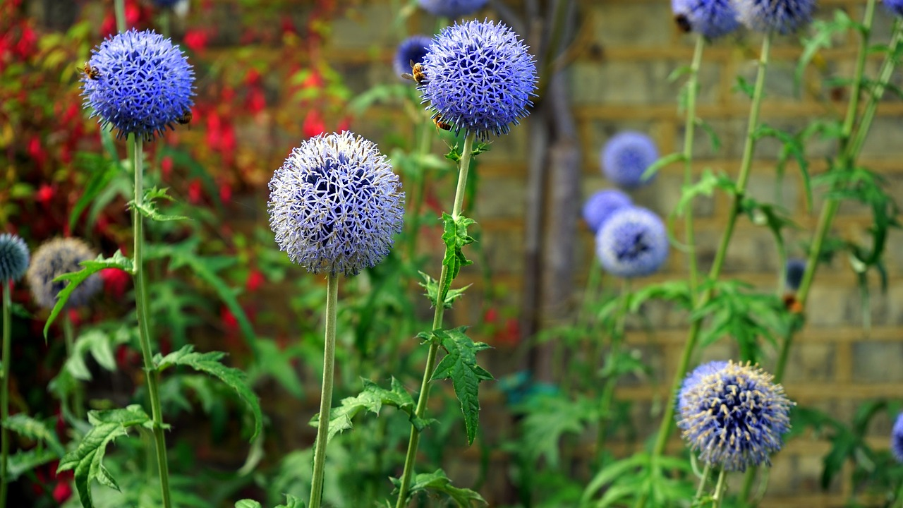 Flowerheadspringnaturesummer Free Photo From Needpix