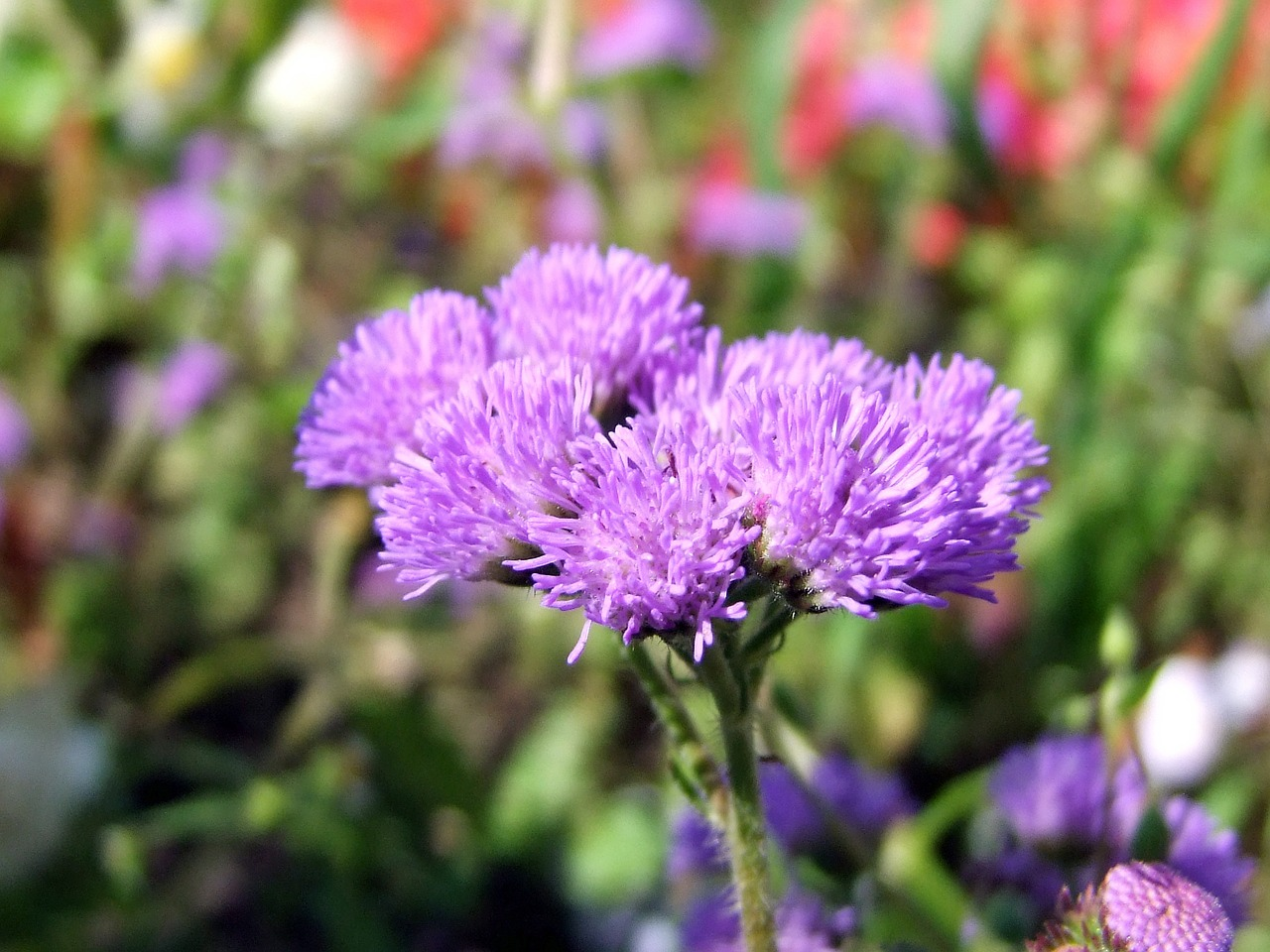 flower purple flowers free photo