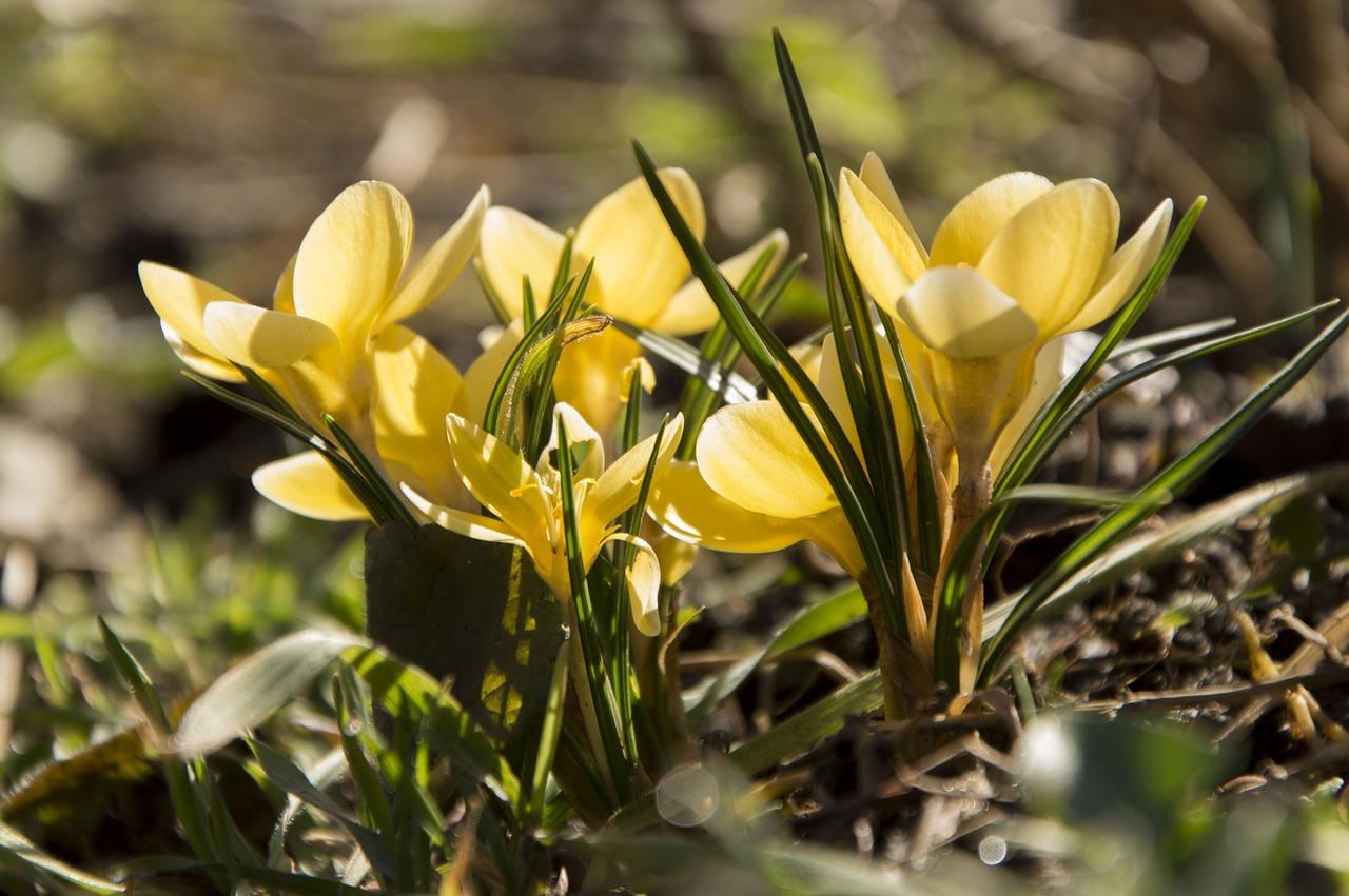 Flowera Yellow Flowernaturebeautiful Flowerflowers Free Photo
