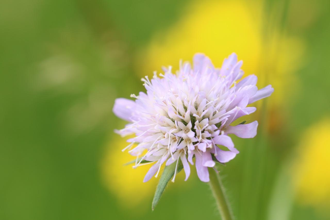 Flowermeadownaturegrasseswild Flowers Free Photo From Needpix