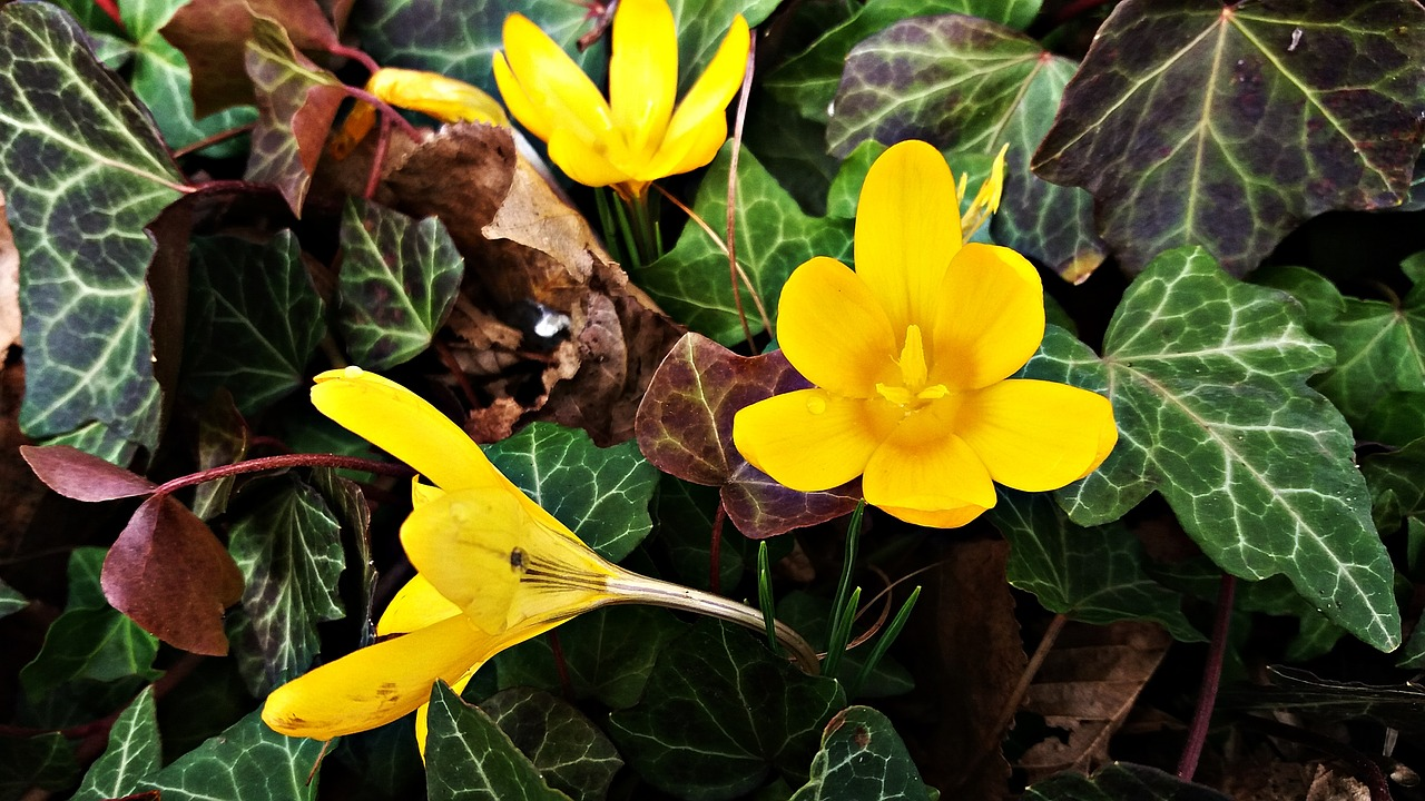 Floweryellowplantspringbloom free photo from needpix floweryellowplantspringbloomsummerbloomingdaisy mightylinksfo