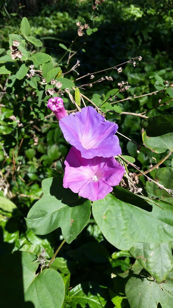 Flowerpurplepurple flowersspringaustralian free photo from flowerpurplepurple flowersspringaustraliangreenenvironmentqueensland mightylinksfo