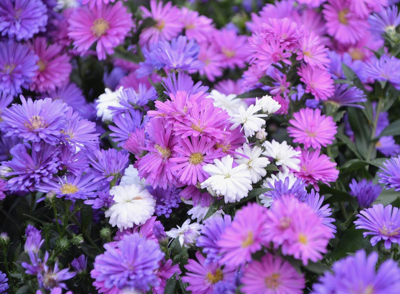 Flowerflowerswhite flowersviolet purplegreen leaves free photo flowerflowerswhite flowersviolet purplegreen leavesbouquetoffer mightylinksfo