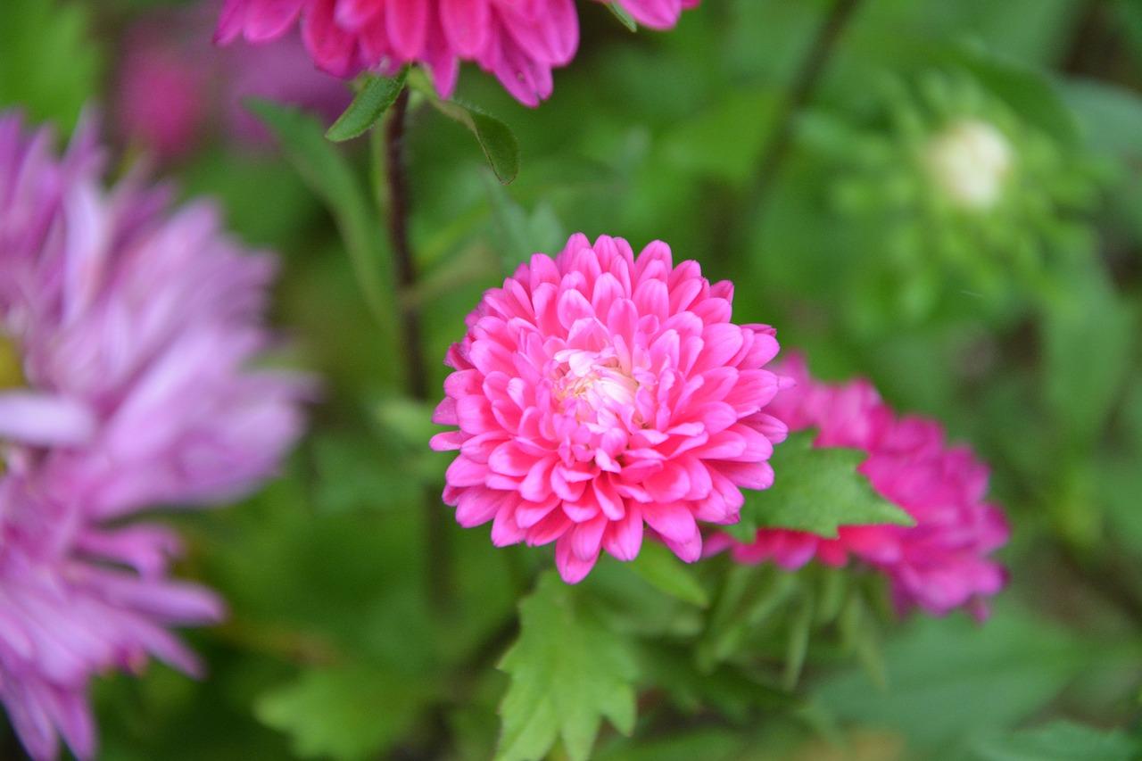 Flowerpink Flowersplantsgreen Leavesplant Free Photo From