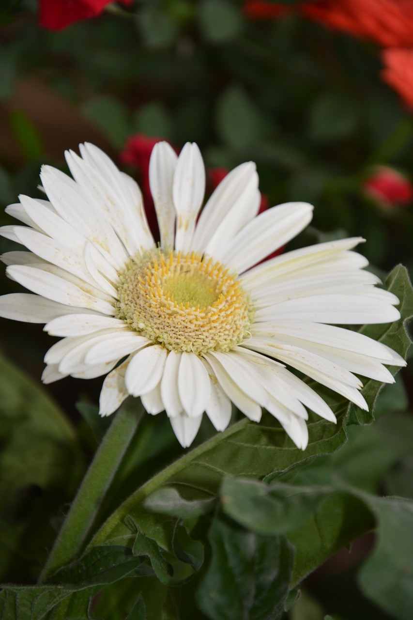 Nature And Flower Pictures Com