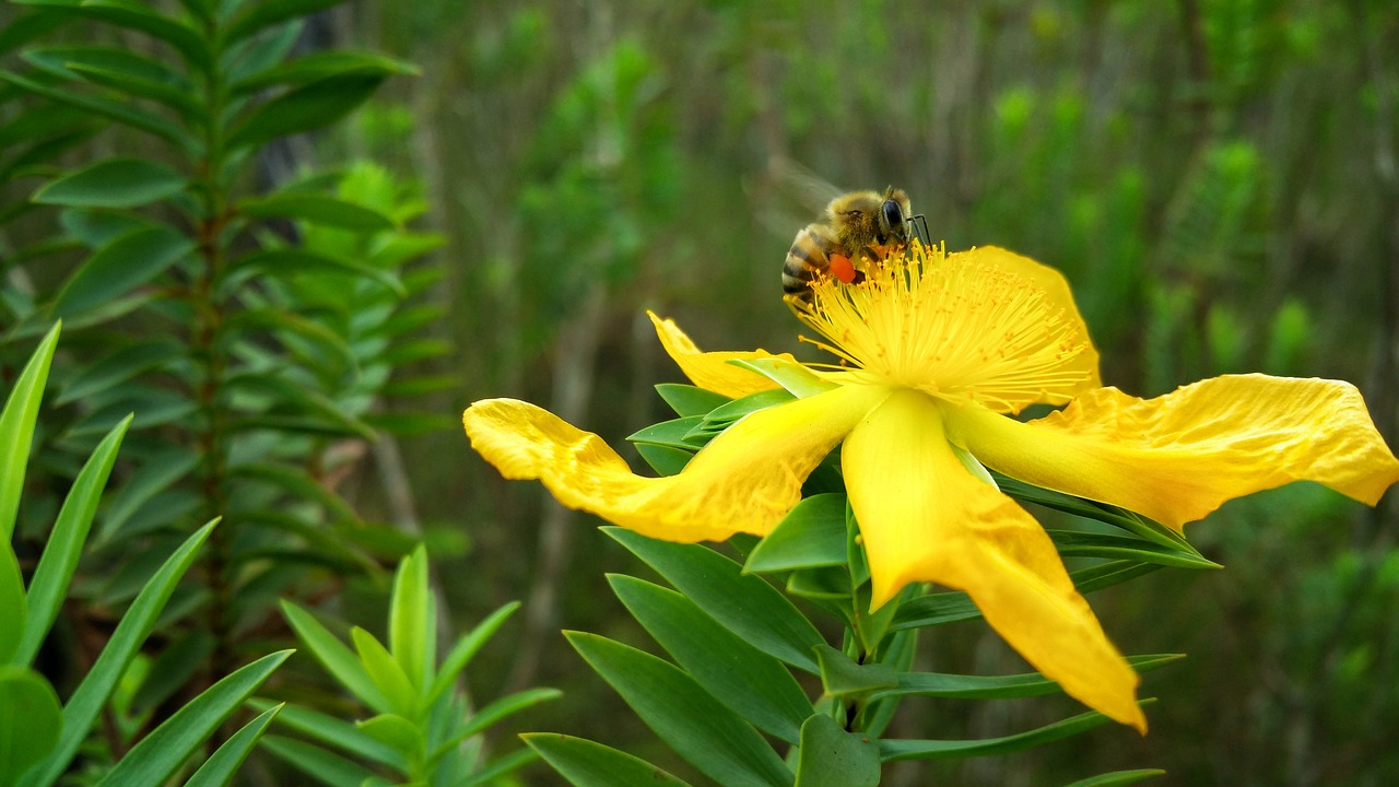 flower bee nectar free photo