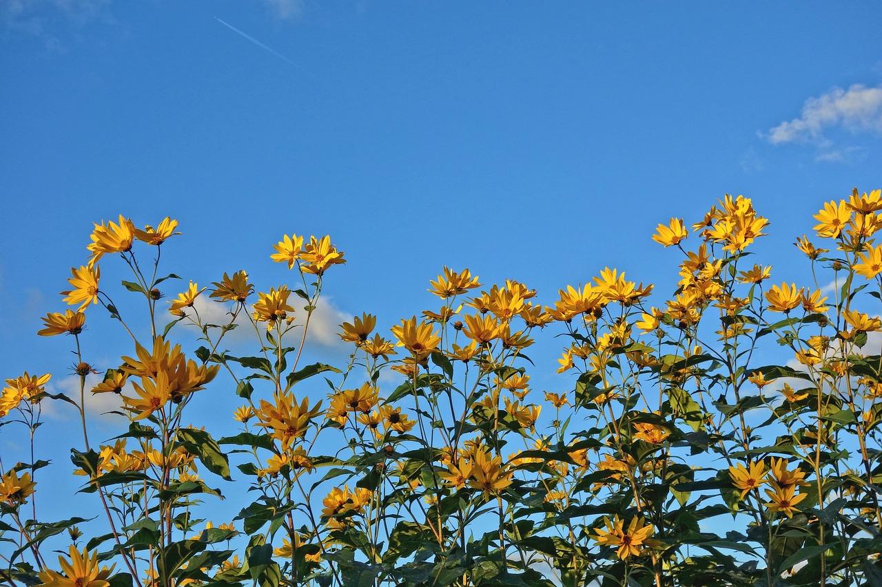 Floweryellow Flowercone Flowerplantleaves Free Photo From