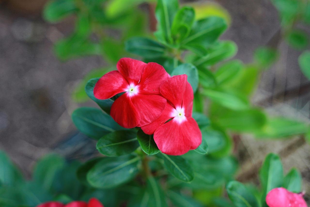 Flowernaturefloraleafgarden Free Photo From Needpix