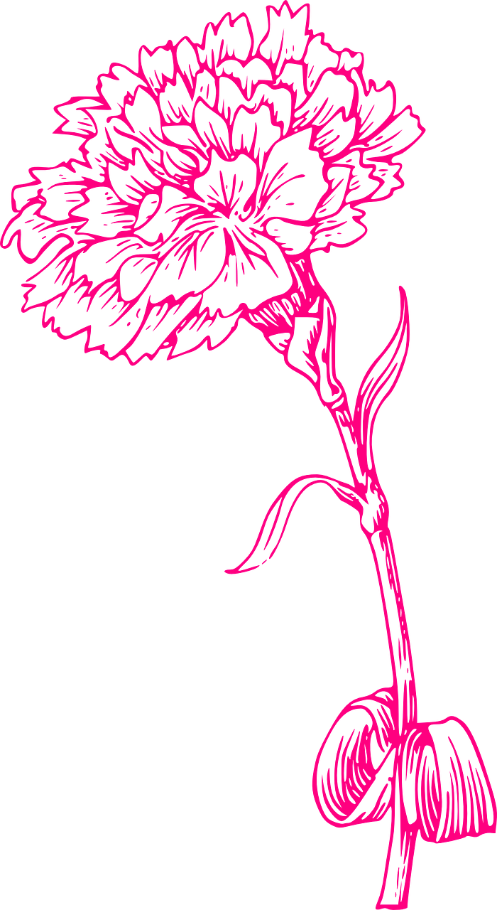 Download Free Photo Of Flower Print Pink Carnation Nature From