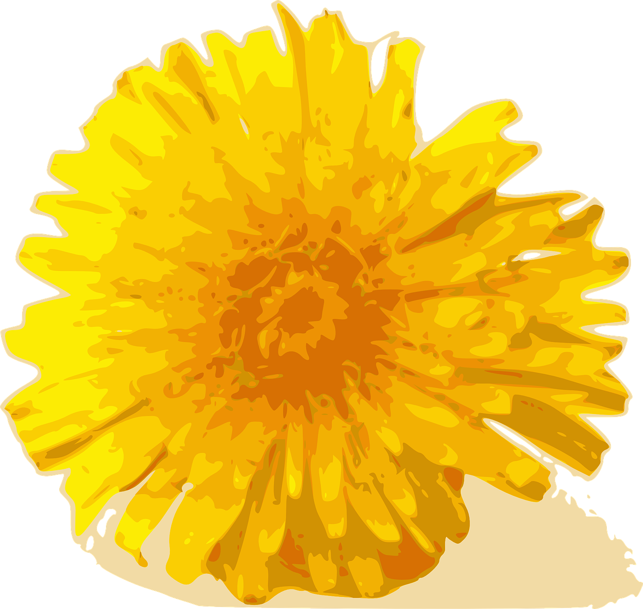 flower dandelion yellow free photo