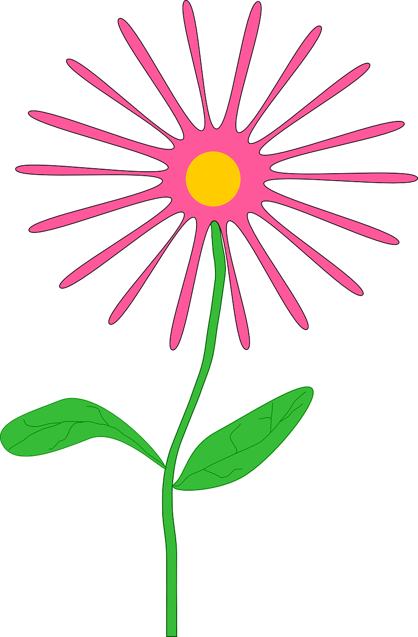 flower,daisy,pink,plant,green,leaves,stem,floral,blooming,blossom,spring,still life,cheerful,petals,thin,free vector graphics,free pictures, free photos, free images, royalty free, free illustrations, public domain