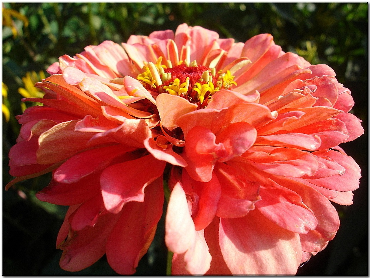 flower garden orange free photo