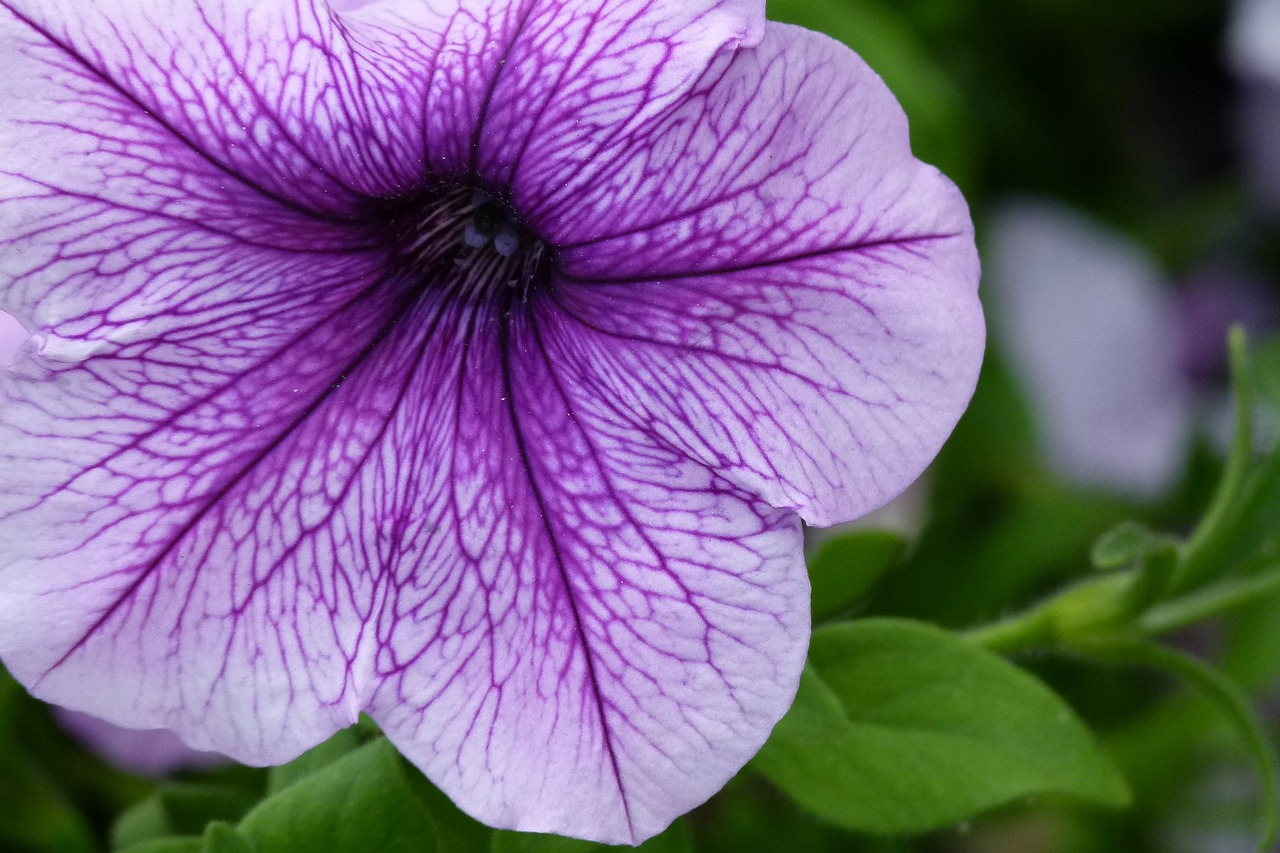 flower purple garden free photo