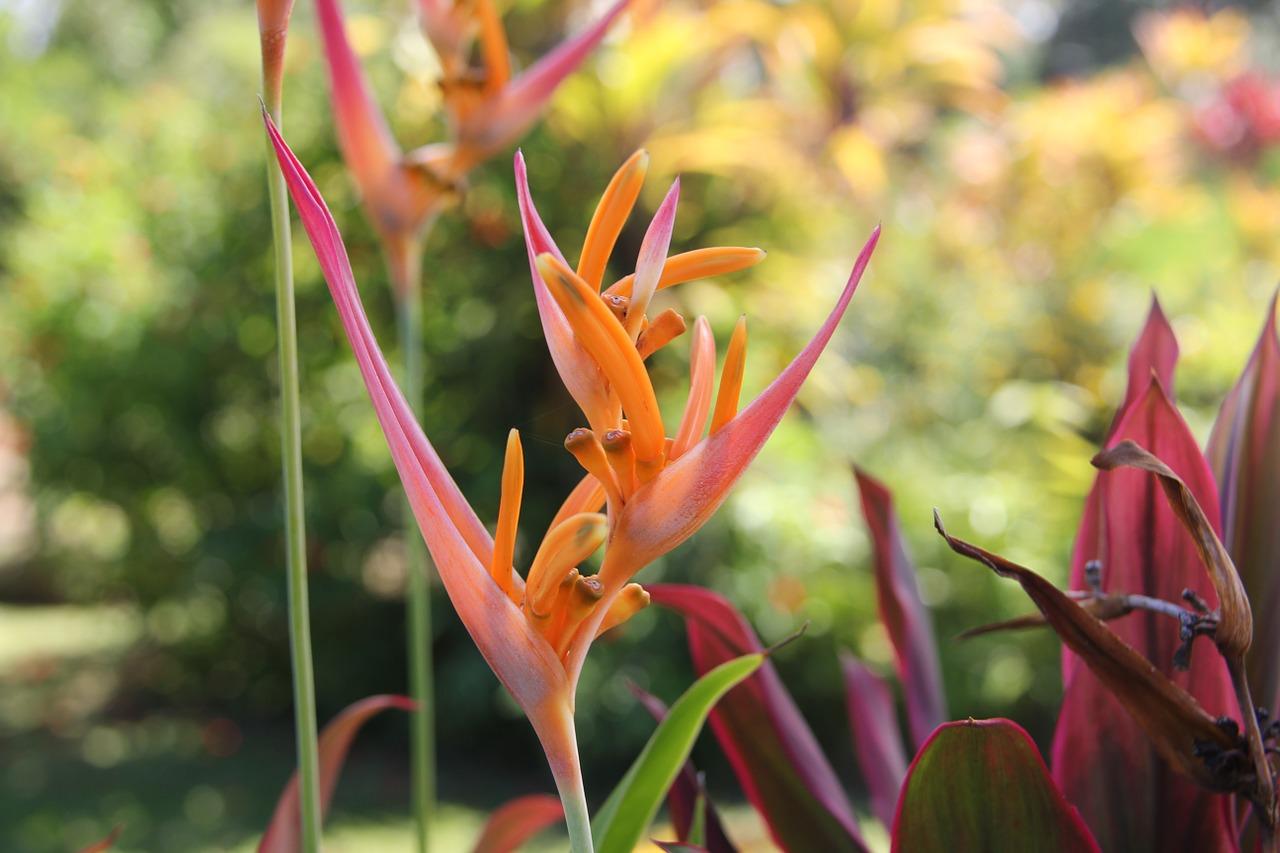 Flowerhawaiian Flowerbird Of Paradisehawaiiantropical Free