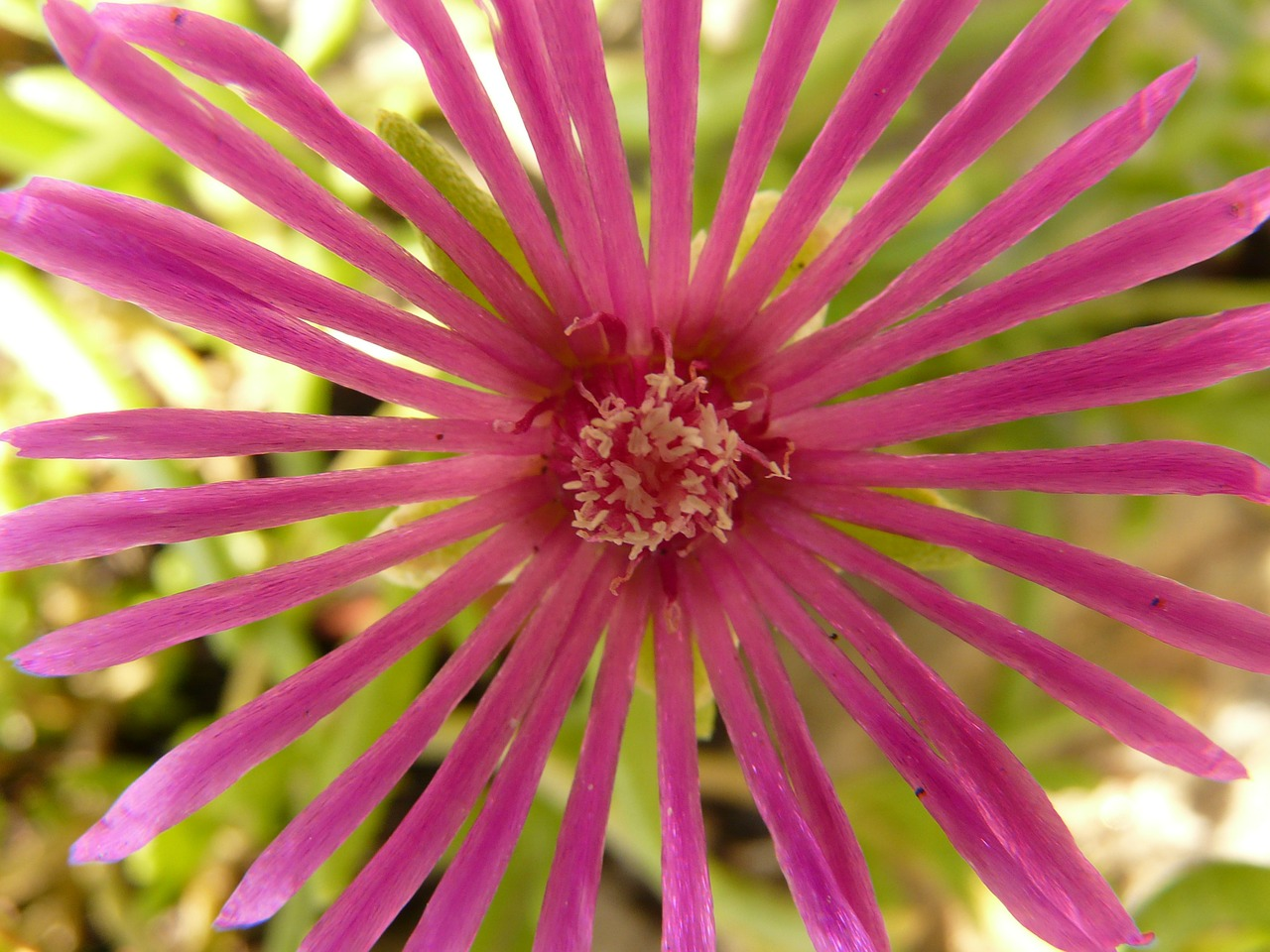 flower nature plant free photo