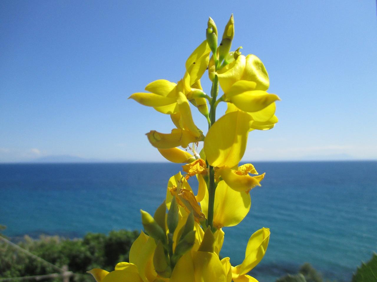 Flowerseafragranceyellow Bluehorizon Free Photo From Needpix