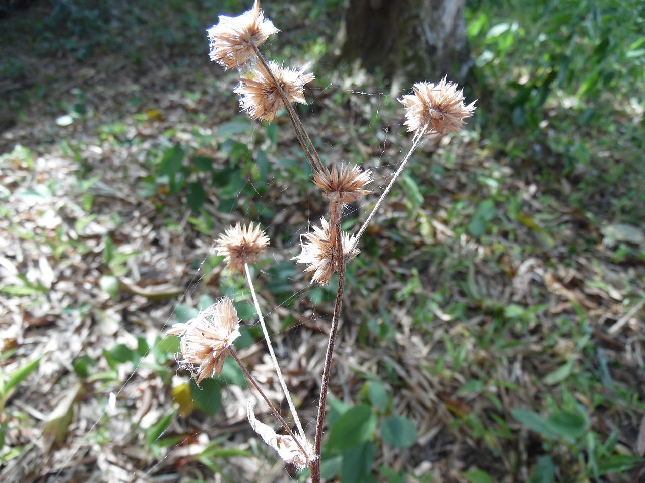 Flowernaturespringsummerplant Free Photo From Needpix