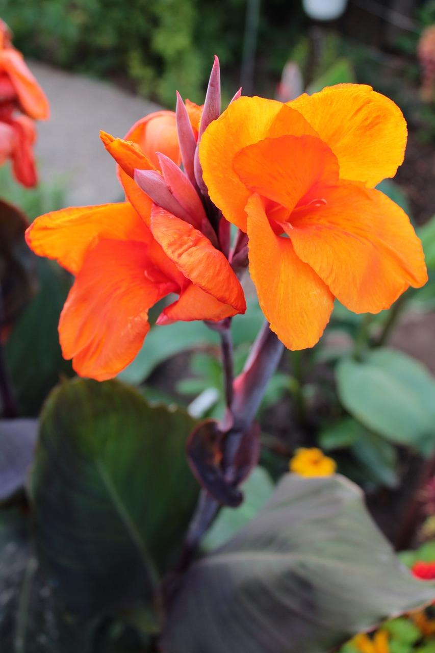 Flowerorangeflowersgarden Flowerssummer Free Photo From