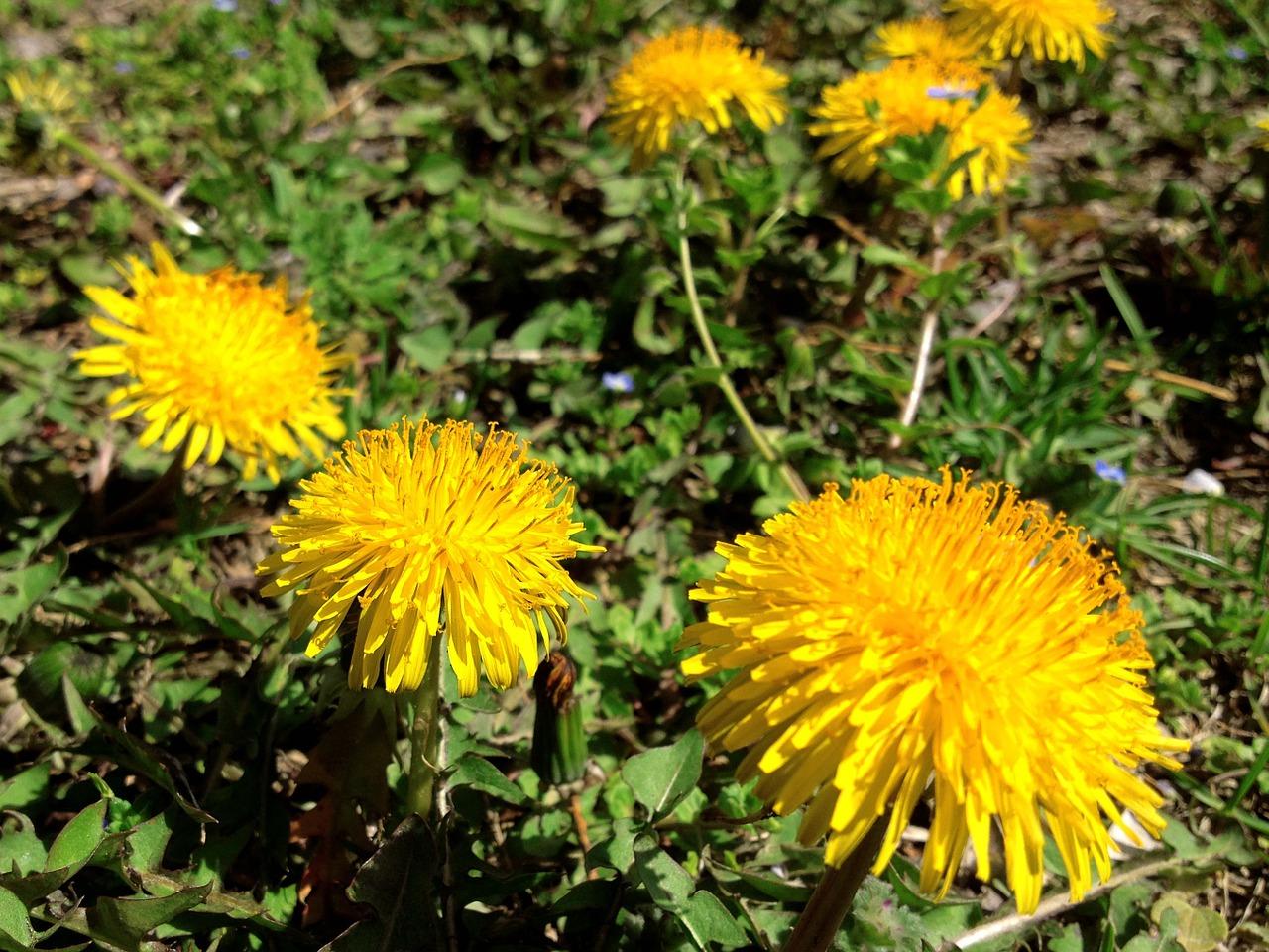 Flowerpinkgeraniumgumgreen Free Photo From Needpix