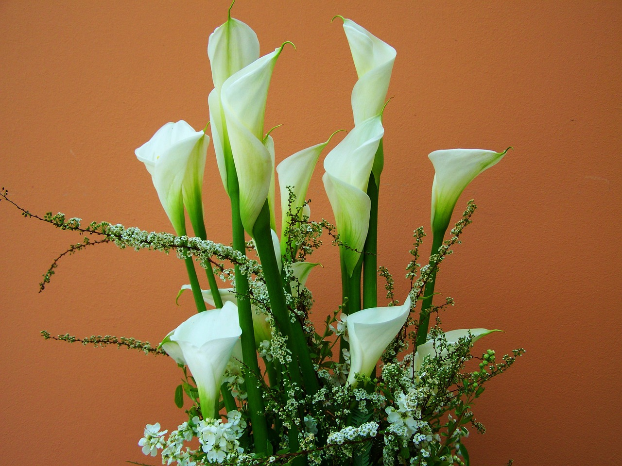 Flower bouquetwhite calla lilycut flowerfree photosfree images flower bouquetwhite calla lilycut flowerfree photosfree images izmirmasajfo