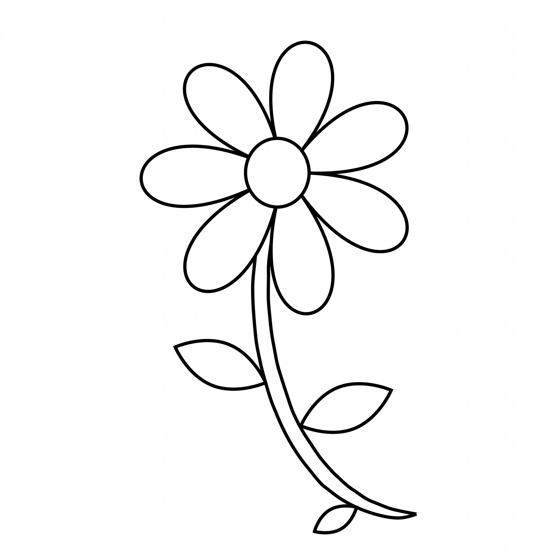Flower,floral,outline,coloring page,coloring book - free ...