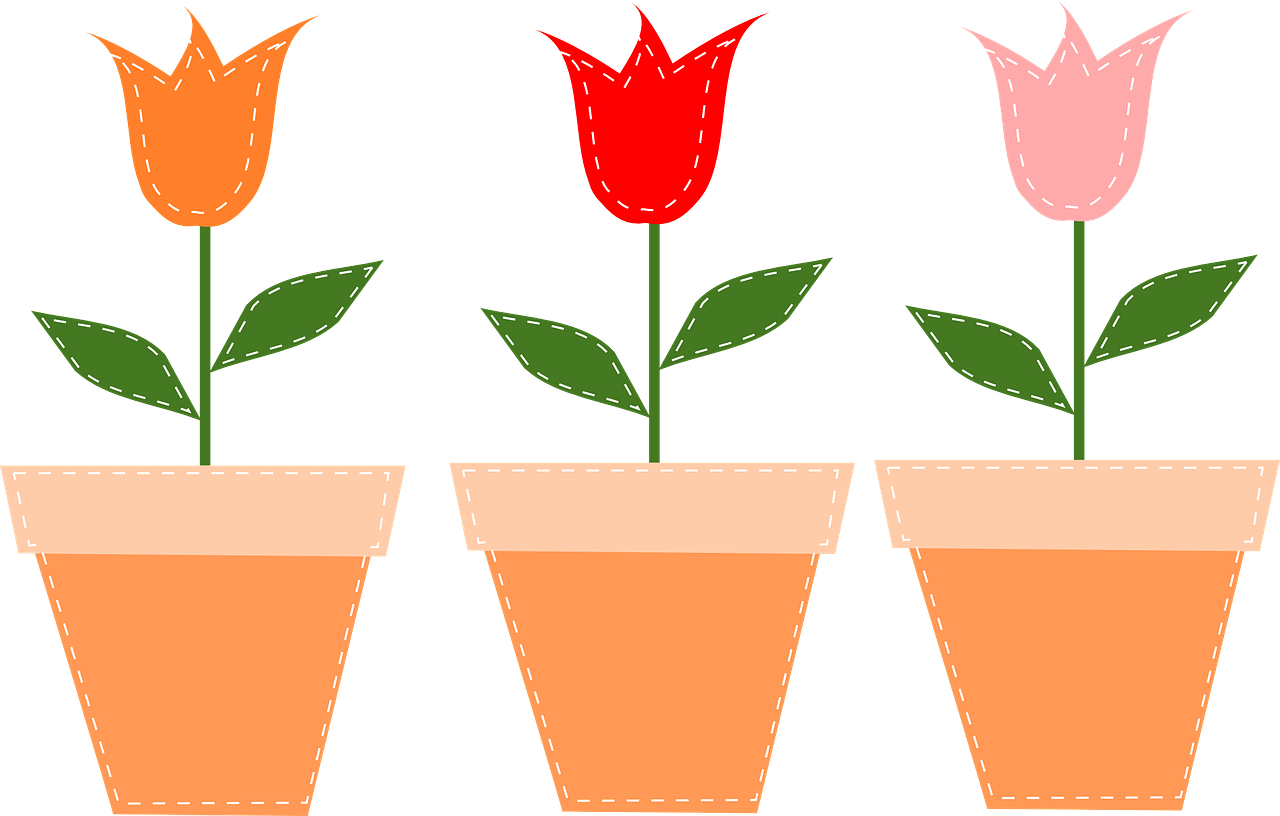 flower pots pots tulips free photo