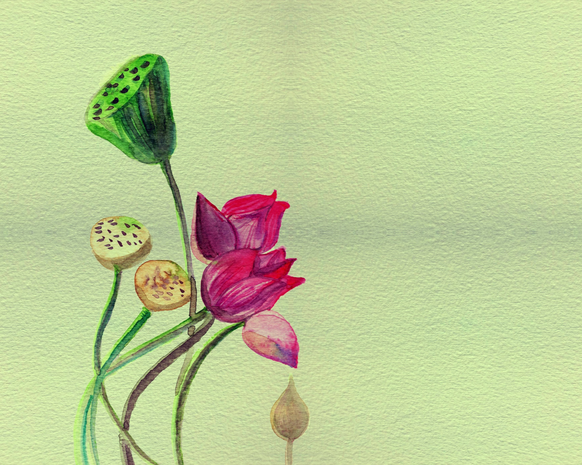 Flowerlotuswatercolorwatercolourlotus Flower Free Photo From
