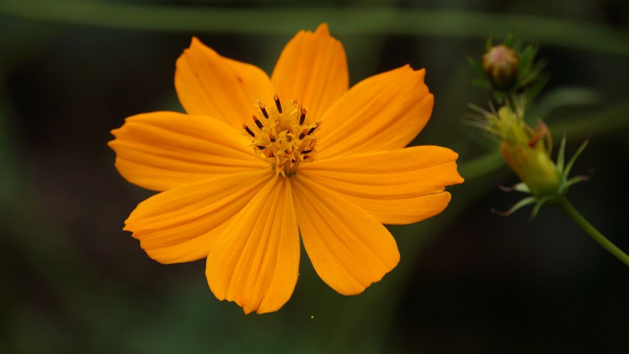 Flowersyellow Flowerscoloryellowbeautiful Free Photo From