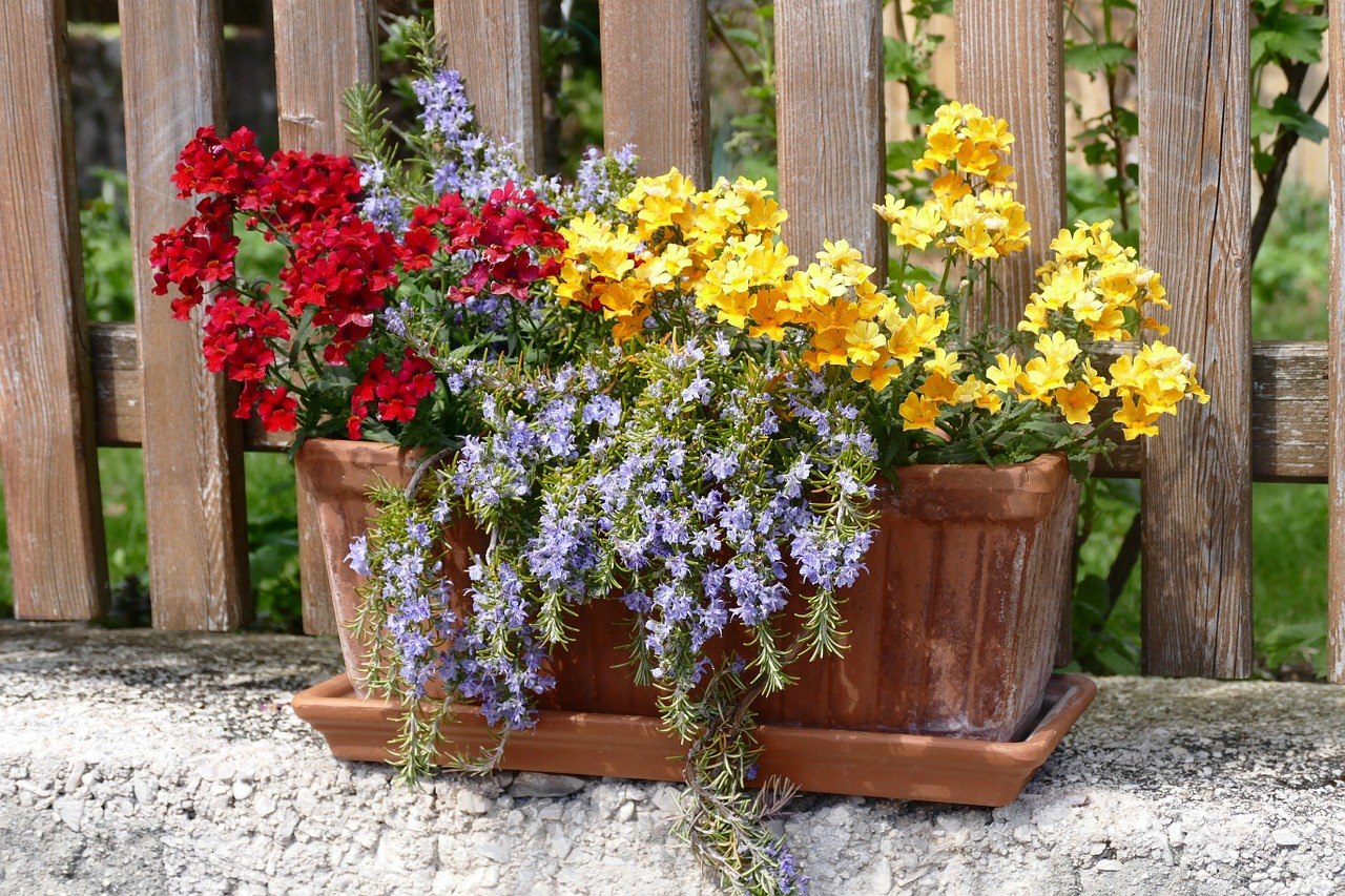 flowers balcony flowerpot free photo