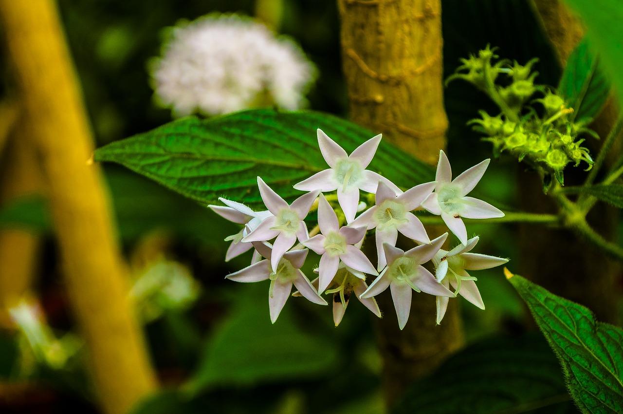 White star,flowers,greens,nature,flower - free photo from needpix.com