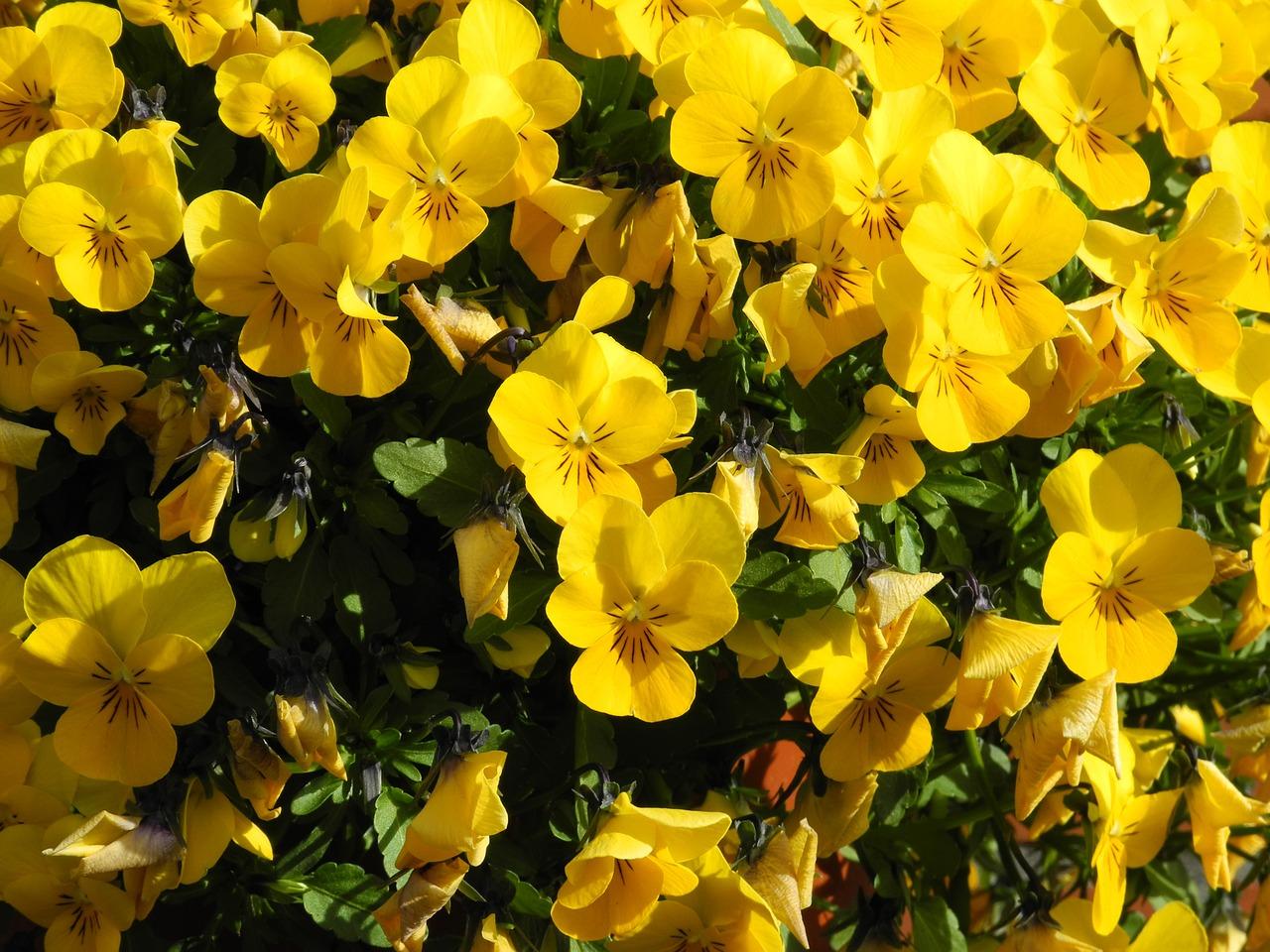 Flowersfloweryellowground Covergarden Free Photo From Needpix