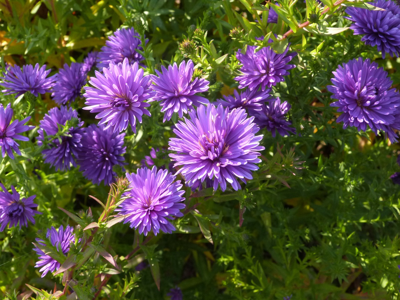 flowers wild flowers floral free photo