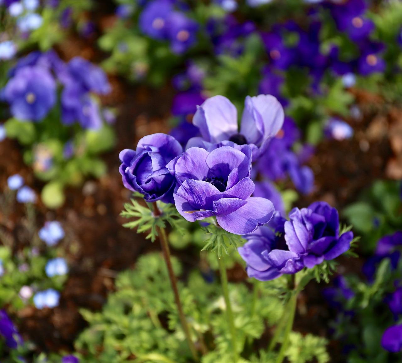 Flowersperennialsplantgardenplanting Free Photo From Needpix