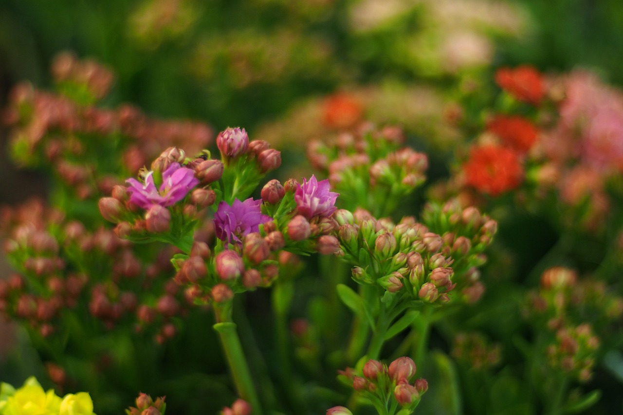 Flowersnaturehibiscus Flowersorchidflower Garden Free Photo
