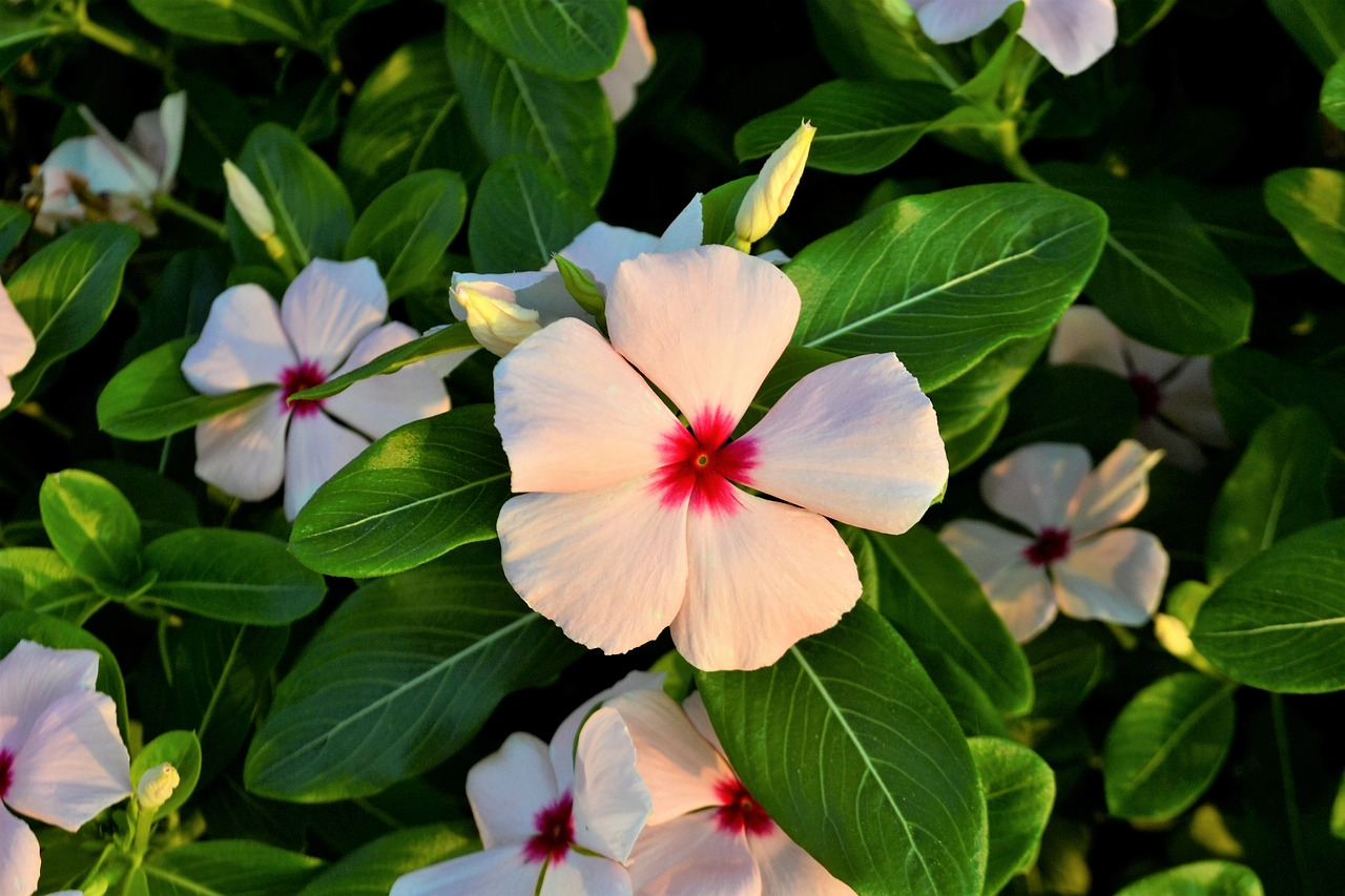 Flowerscloverwhite Flowerredgreen Free Photo From Needpix