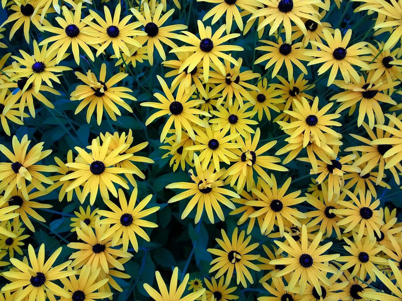 Flowersyellowplantpnature Free Photo From Needpix