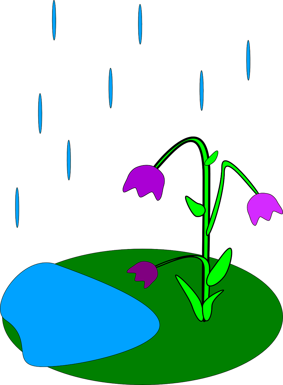 flowers raining rain free picture