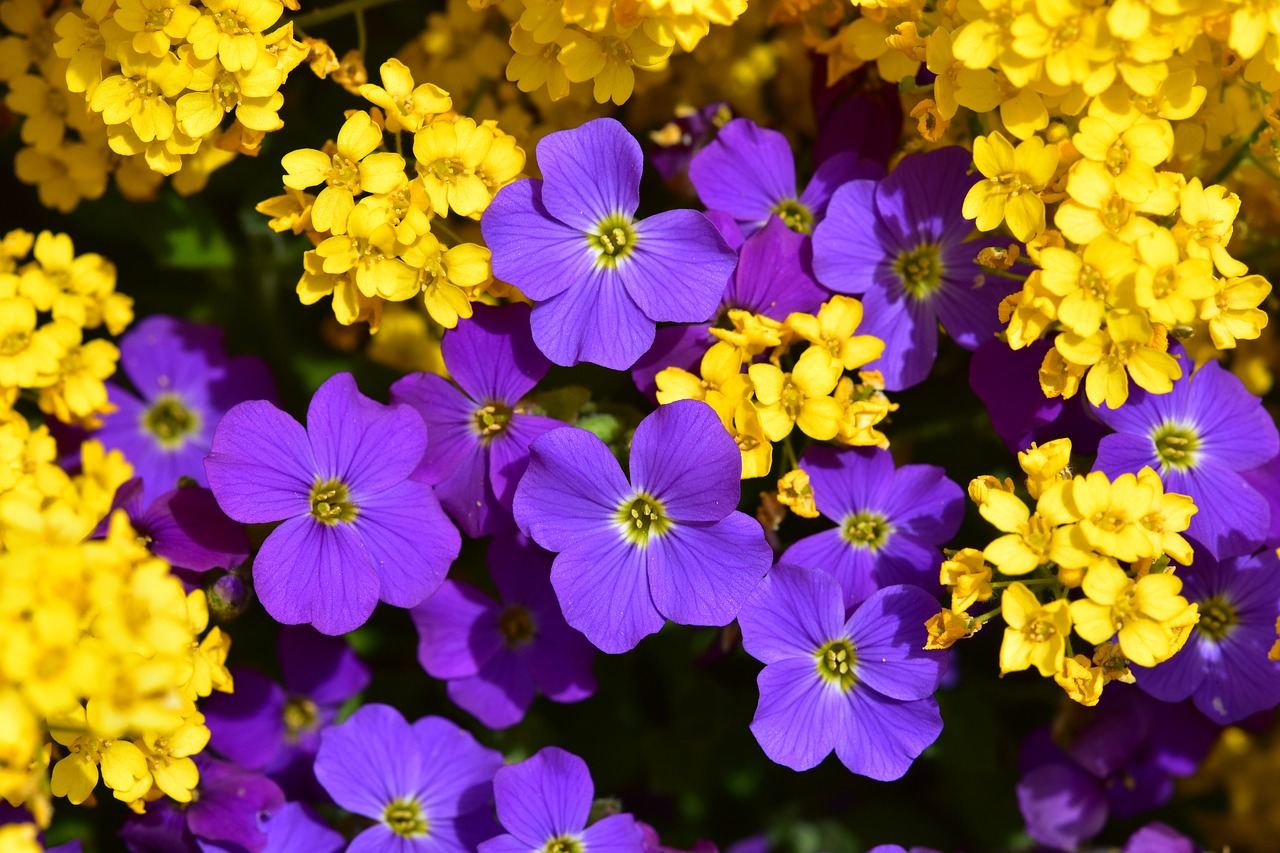 flowers  yellow flowers  purple flowers free photo