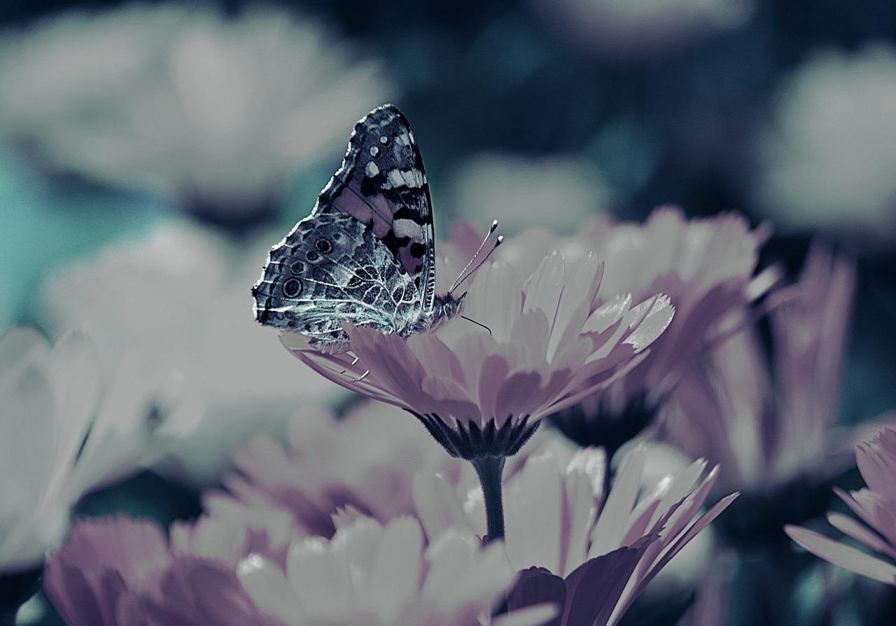 flowers butterfly background free photo