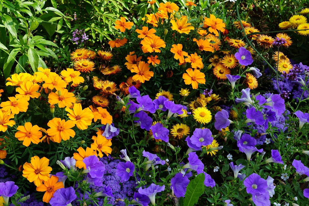все однолетние цветы в саду в картинках бесплатные картинки обои