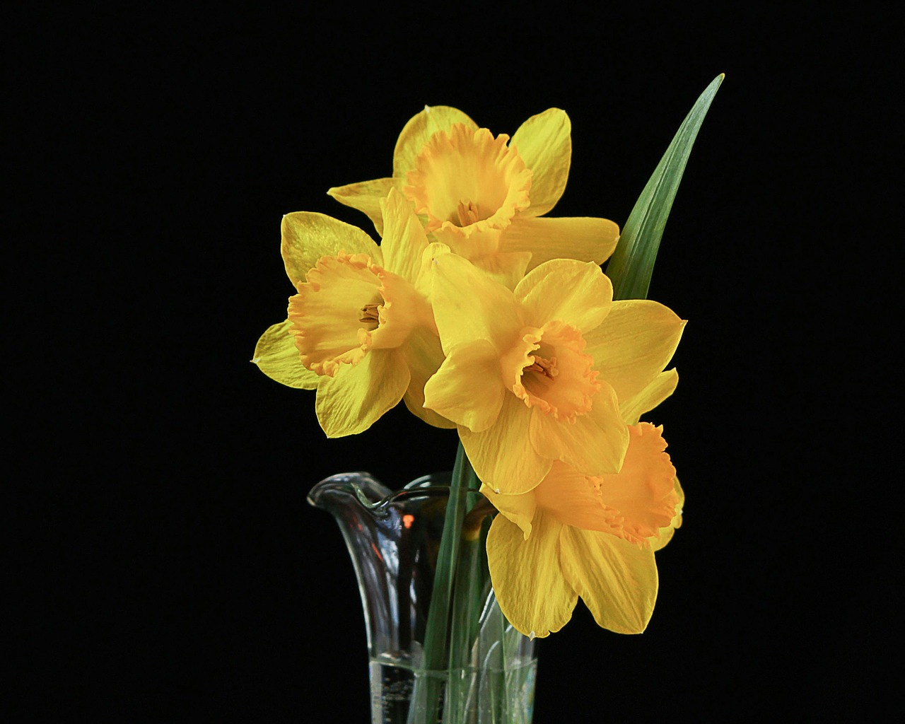 flowers vase daffodils free photo
