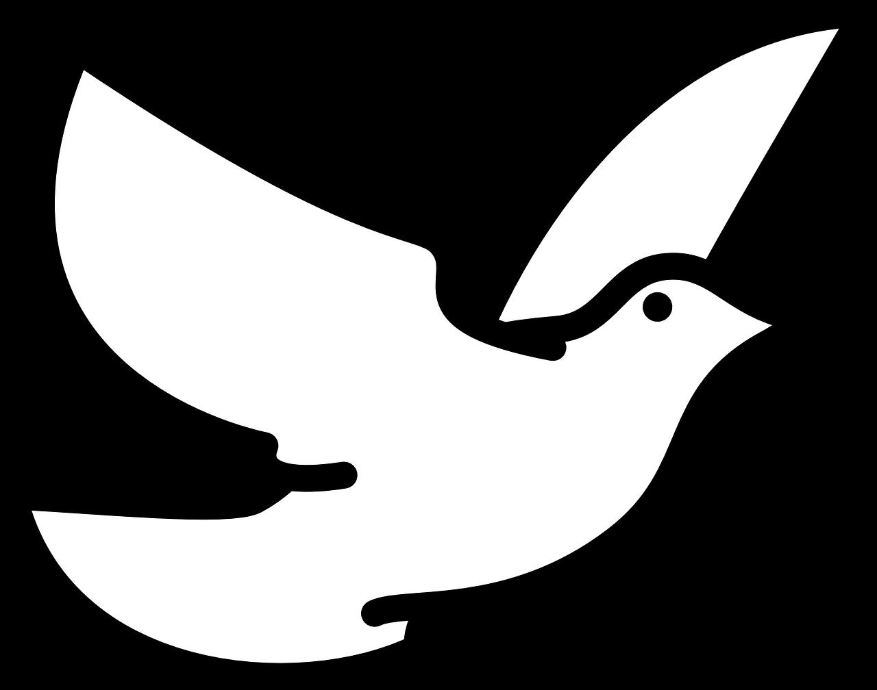 Flyingbirdswhitedovecolumbidae Free Photo From Needpix