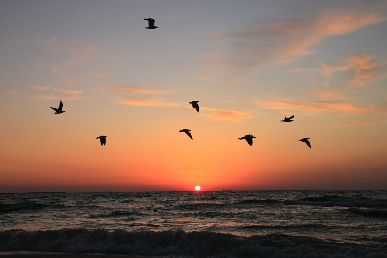 flying seagulls sunrise free photo