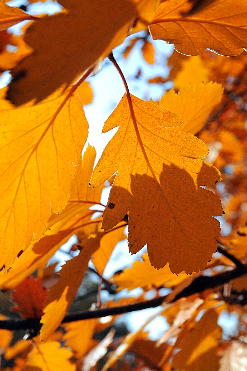 foliage autumn nature free photo
