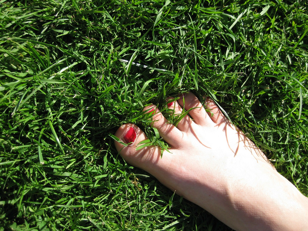 foot meadow grass free photo