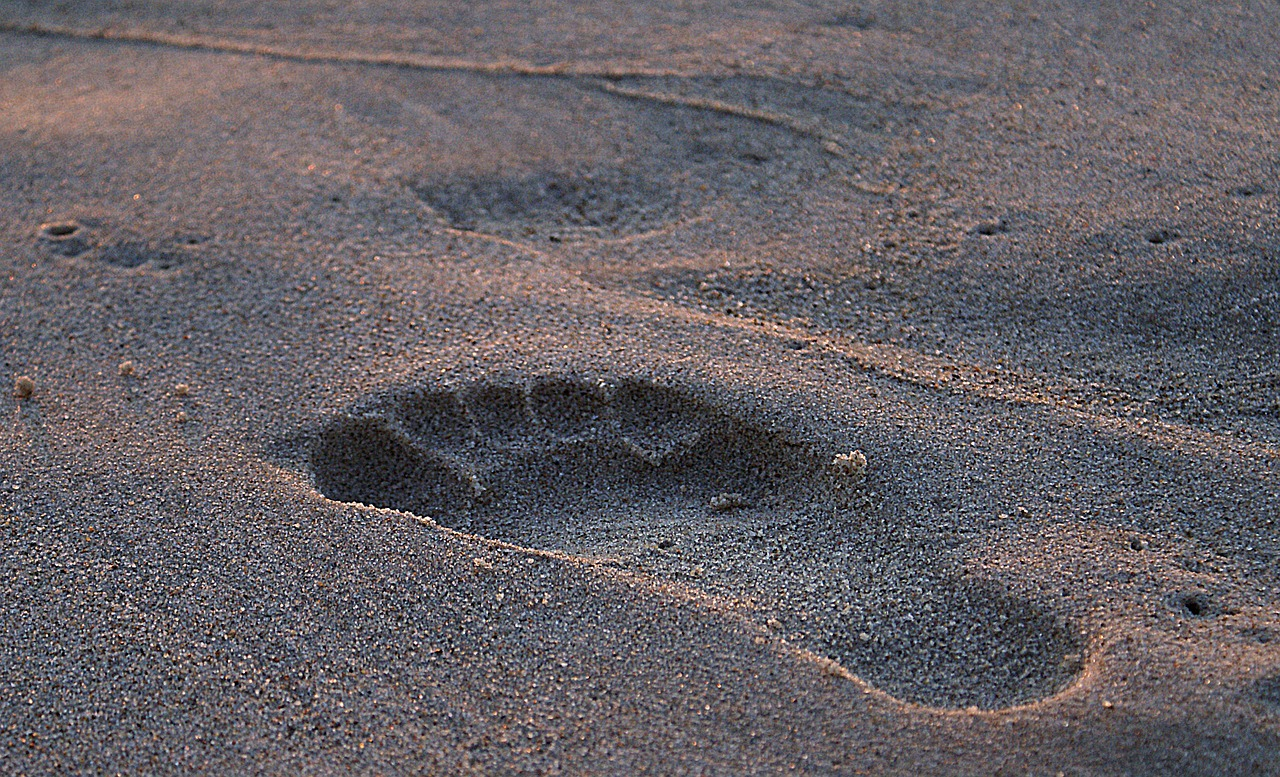 footprint footprint in the sand wet sand free photo