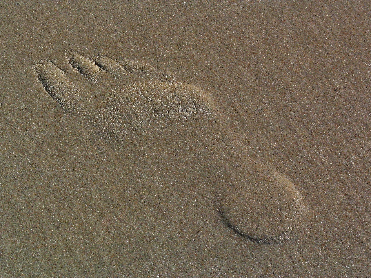footprint in the sand traces sand free photo