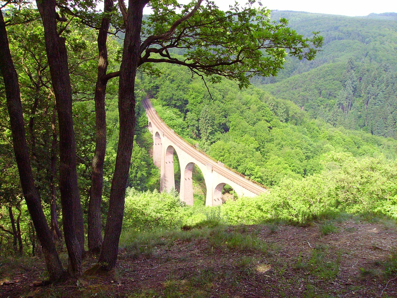 forest glade viaduct free photo